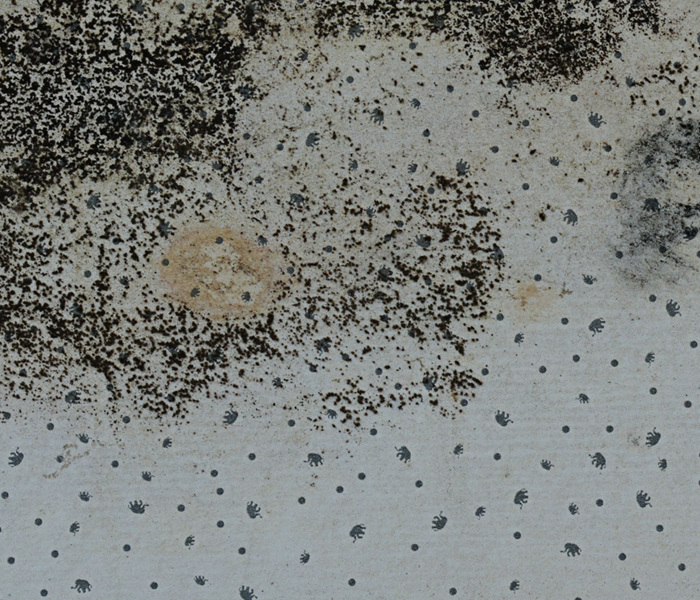 What is the best way to get rid of mold?  Before
